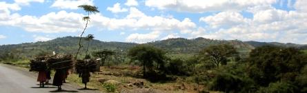 'Holzsammlerinnen in Äthiopien' (Unterwegs nach Jinka).