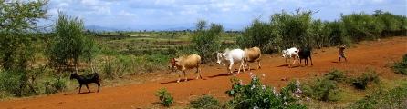 'Äthiopischer Hirtenjunge' (Unterwegs nach Jinka).